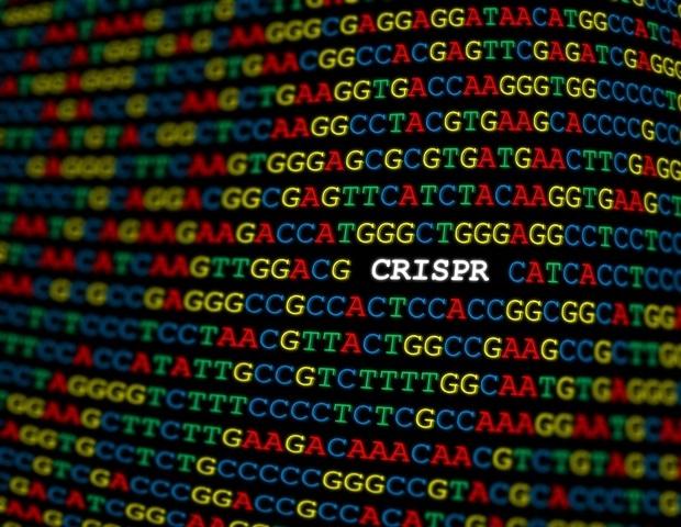 Использование возможностей CRISPR для контроля поведения ДНК-чувствительных материалов