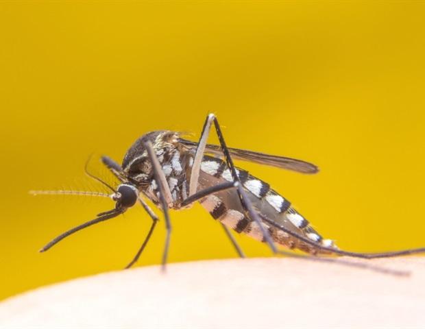 Исследование предполагает, что мутации помогли Brown Howlers справиться с вирусом желтой лихорадки