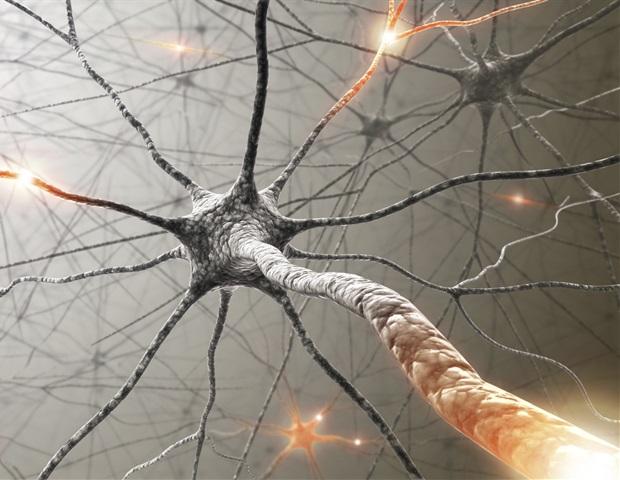 Исследователи находят биологическую систему, которая управляет реакцией клеток на воздействие опиоидных препаратов