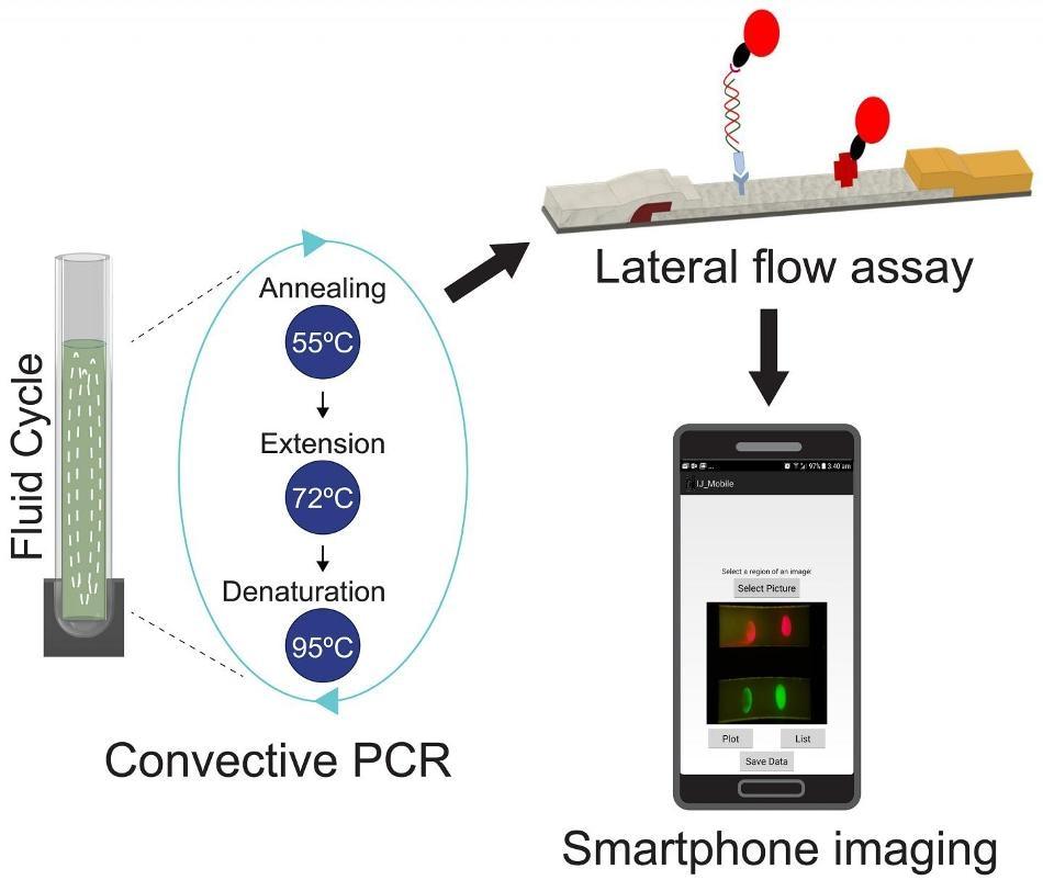 Квантовые точки и смартфон можно использовать для обнаружения смертельных бактерий