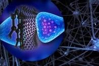 Магнитно-чувствительный нанокатализатор может удаленно контролировать биореакции в живых клетках