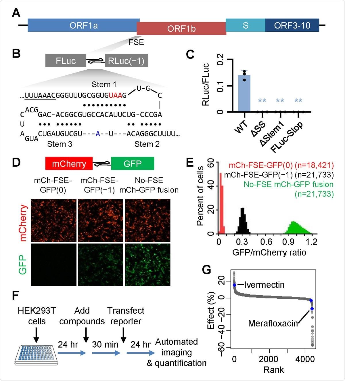 Новый ингибитор трансляции РНК SARS-CoV-2