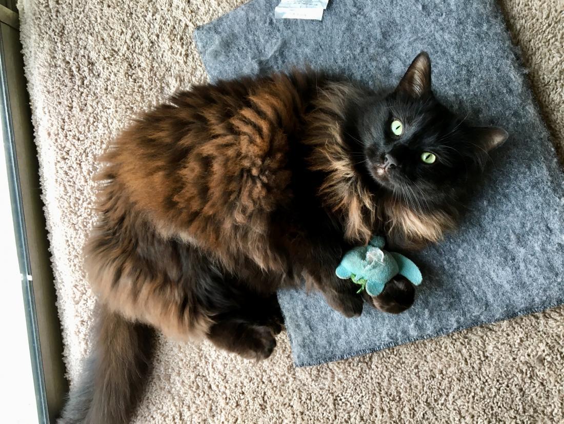 Отвечая на 5 главных вопросов о кошачьей мяте