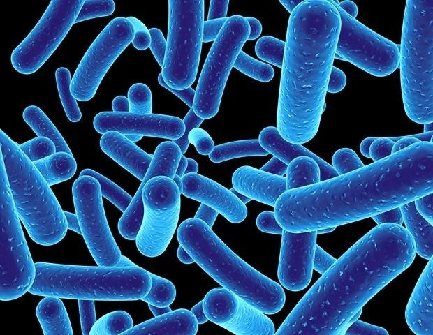 Патоген холеры может приобретать большие участки генетического материала от соседних бактерий